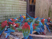 AUCTION - Exotic Birds,  ,  Cages & More...